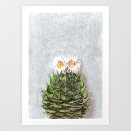 Flowering cactus Obregonia Art Print