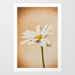 Chrysanthemum Texture Effect Art Print