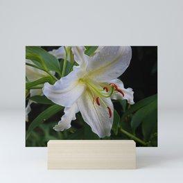 The Lily Lingers Mini Art Print