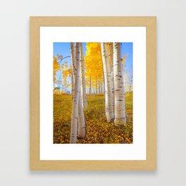 Aspens In Autumn, Utah Framed Art Print