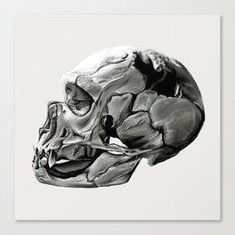 Neanderthal Skull Canvas Print