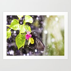 Butterfly Shower Art Print