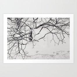 Black & White (6 of 7) Art Print