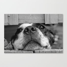 dog looking through fence Canvas Print