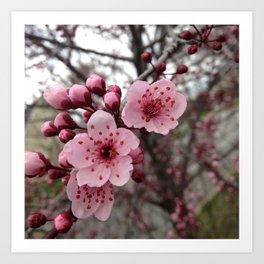 Fall Blossoms Art Print