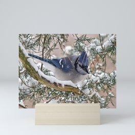 Snow Jay Mini Art Print