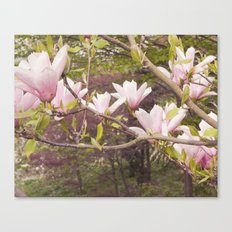 Pink Melodies Canvas Print
