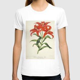 Lilium Sinicum Vintage Botanical Floral Flower Plant Scientific T-shirt