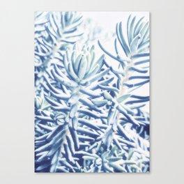 Sunday Morning Succulents Canvas Print