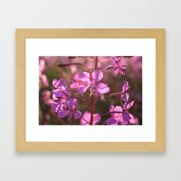 Geitrams makro Framed Art Print