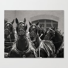 Percheron Horse Team, 2008 Canvas Print