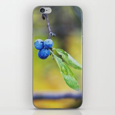 autumn fruit. iPhone & iPod Skin