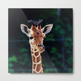 Sweet Young Giraffe Metal Print