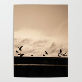 waves and seagulls dance Poster