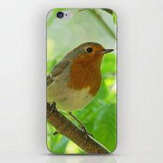 Robin in the bushes iPhone & iPod Skin