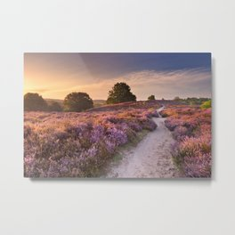 I - Path through blooming heather at sunrise, Posbank, The Netherlands Metal Print