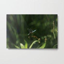 Eastern Pondhawk Dragonfly - Photographed in Ontario Metal Print