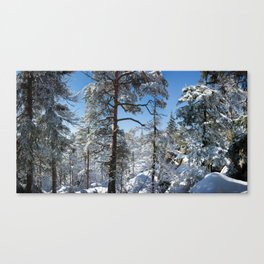 Winter in March Canvas Print