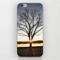 Sunset Between a Tree iPhone & iPod Skin