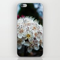 coasters iPhone & iPod Skins featuring Cedar Point Floral by kristi-cakes