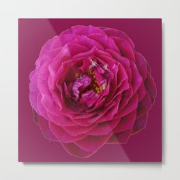 """BLUE YONDER"" MAGENTA ROSE  MAGENTA COLOR ART Metal Print"