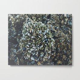 Mussel Cluster Metal Print