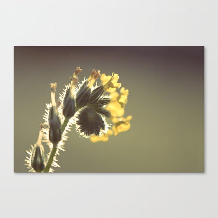 Curl Canvas Print