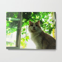 Marmalade Window Kitty Metal Print