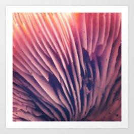 Pink Gills Art Print