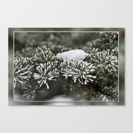 Snowy Evergreen Canvas Print
