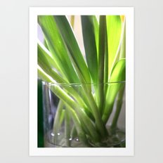 tulip stems Art Print