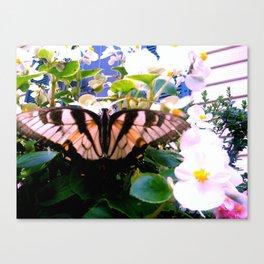 Summer;flies Canvas Print