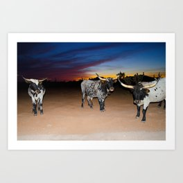 Bulls Night Out Art Print