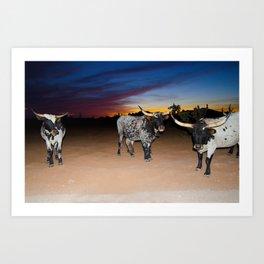 Bulls Night Out Art Print