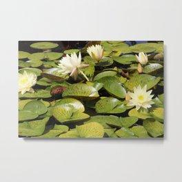 Lingering Lily Pads Metal Print