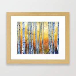 Birch Trees at Sunset Framed Art Print