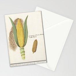 Corn Zea mays (1596-1610) by Anselmus Botius de Boodt Stationery Cards