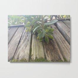 Moss-covered Planter Metal Print