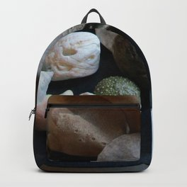 Beach Curiosity Collection Display Backpack