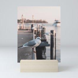 Seagul in a marina, Zurich Switzerland Mini Art Print