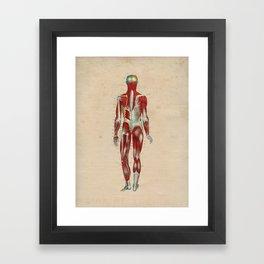 Human Muscle Anatomy 1841 Print Framed Art Print