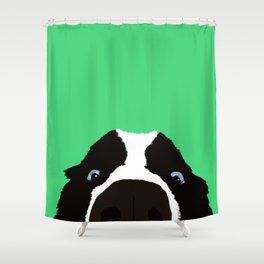 Begging Border Collie Shower Curtain