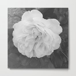 One White Rose Flower Blooming Metal Print