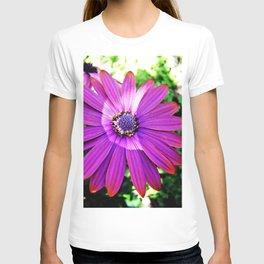 Purple African Daisy T-shirt
