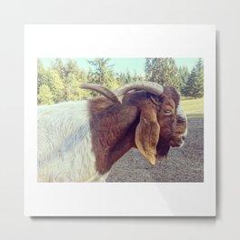 jake the goat Metal Print