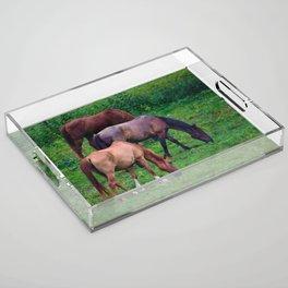 Grazing Horses Acrylic Tray