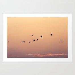 Pájaros Art Print
