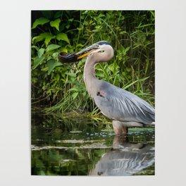 Heron's beakfast Poster