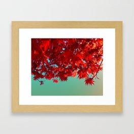 Fire Maple Framed Art Print