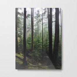 Orcas Island Foggy Forest Metal Print